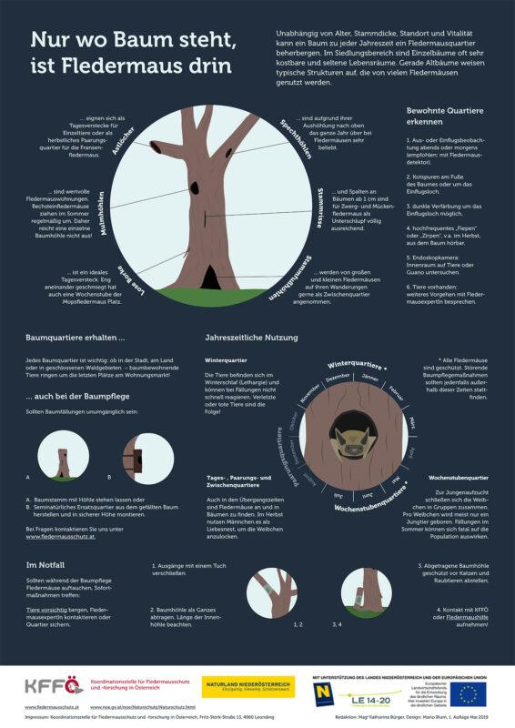 Infografik Fledermausquartiere in Baumhöhlen